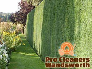 Trimmed Hedge Wandsworth